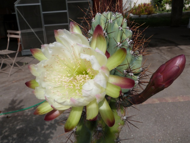 cactus - Page 2 227065P1200415