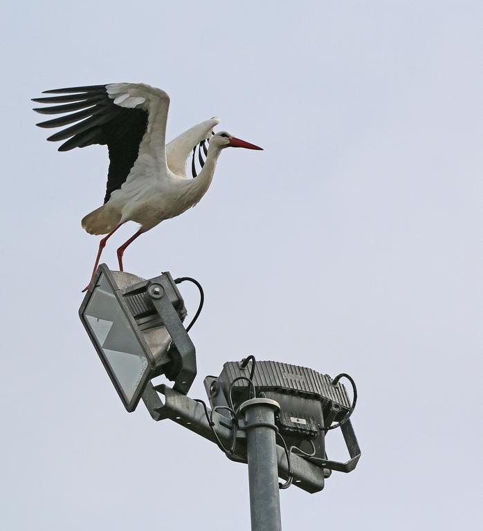 Mes oiseaux 230080rep1473Copier