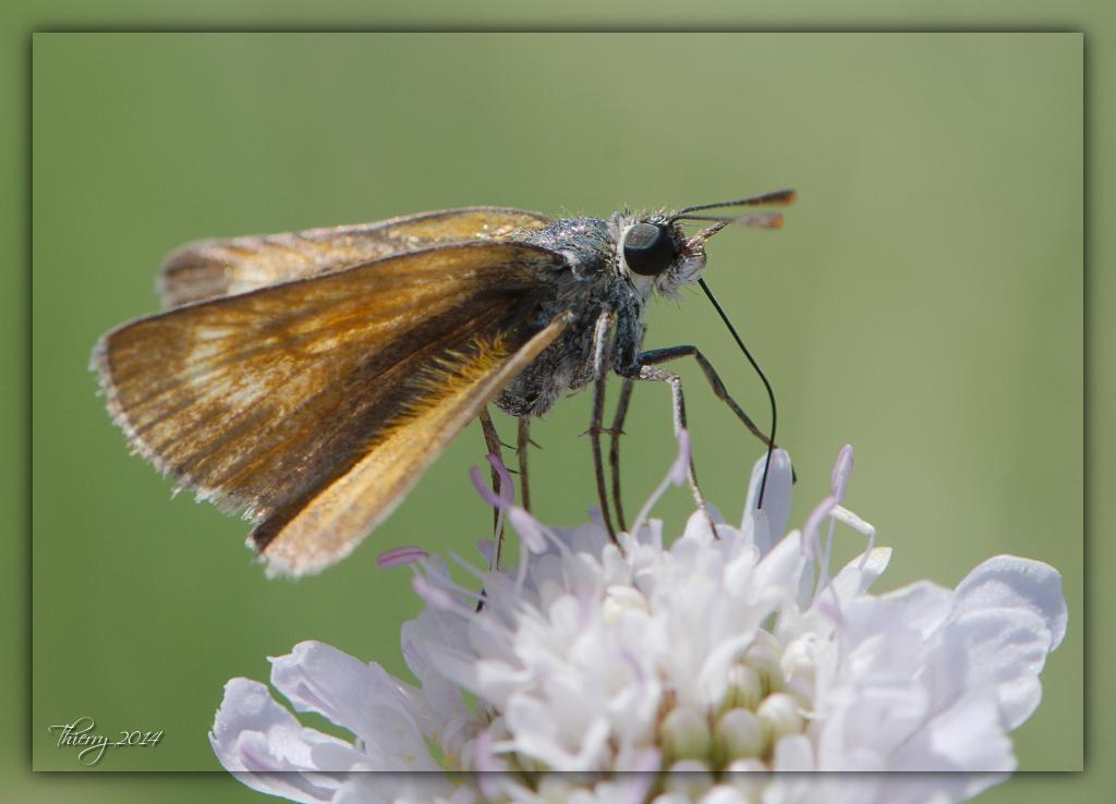Fil ouvert - Proxi - Papillons 230429macro35