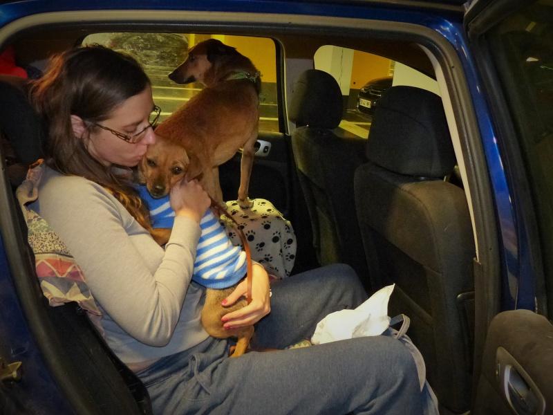 Tzupy, chien de notre quartier, mâle très sociable, né en 2009. 232984P1130262