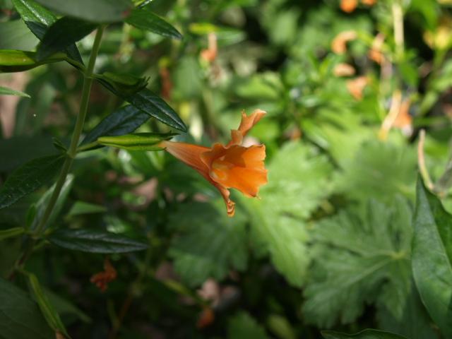 jolie fleur orange 234336P7048891