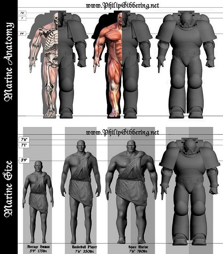 [Débat] Les space marines : humains ou surhumains ? 235511marinegabarits