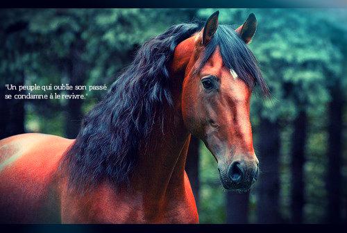 Full Horse V3 236985198130kesha1