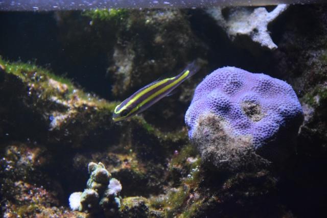 Le nouveau bac du Poissonpané : aquaterrarium de 900L / Nouvelle Calédonie - Page 2 242997DSC0011