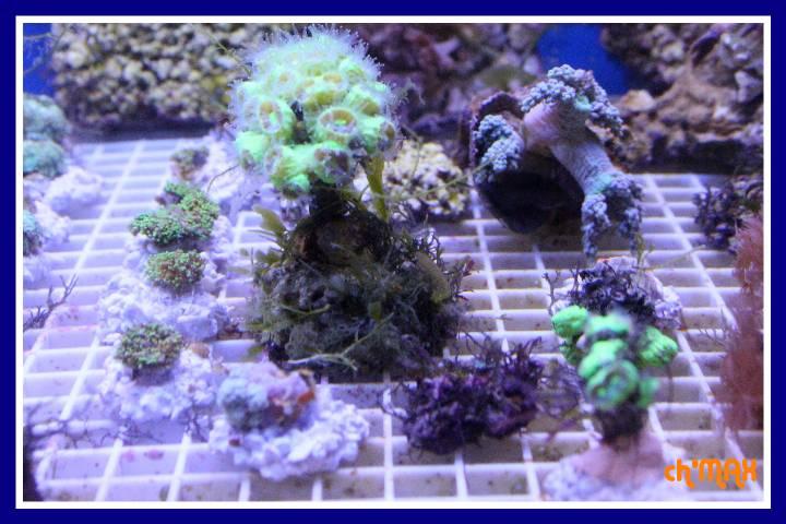 ce que j'amène en coraux a orchie  243154PXRIMG0016GF