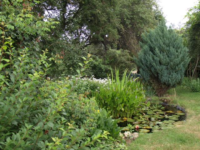 le jardin des plantes du mourot 244577P7202032