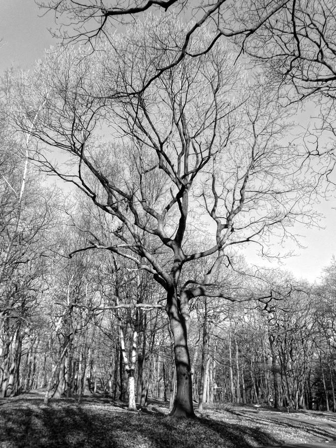 [fil ouvert] la forêt dans tous ses états - Page 13 249103048Copier