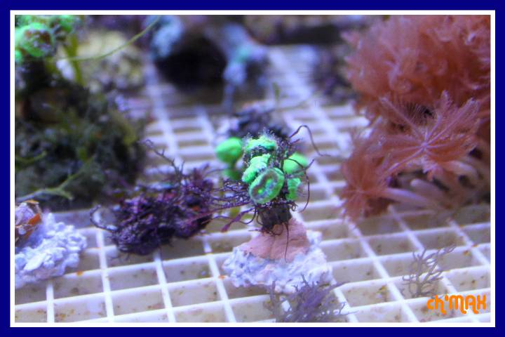 ce que j'amène en coraux a orchie  249457PXRIMG0055GF