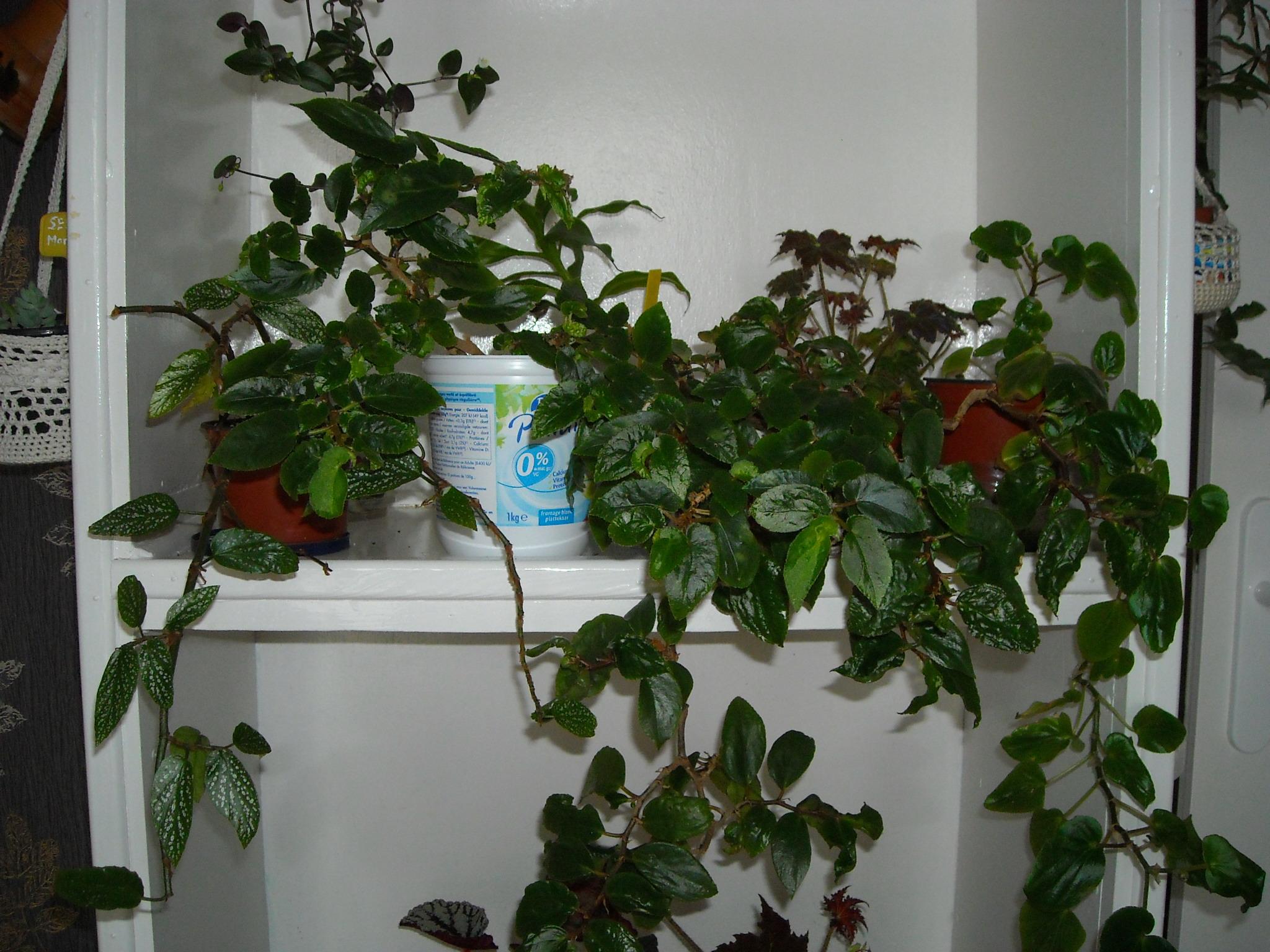 un aperçue de mon HLM 252749ensembledemesplantes003