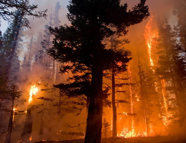 plamen-vatra 259964Washington
