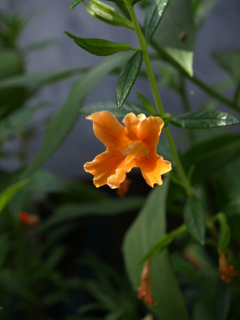 jolie fleur orange 260958P7048889