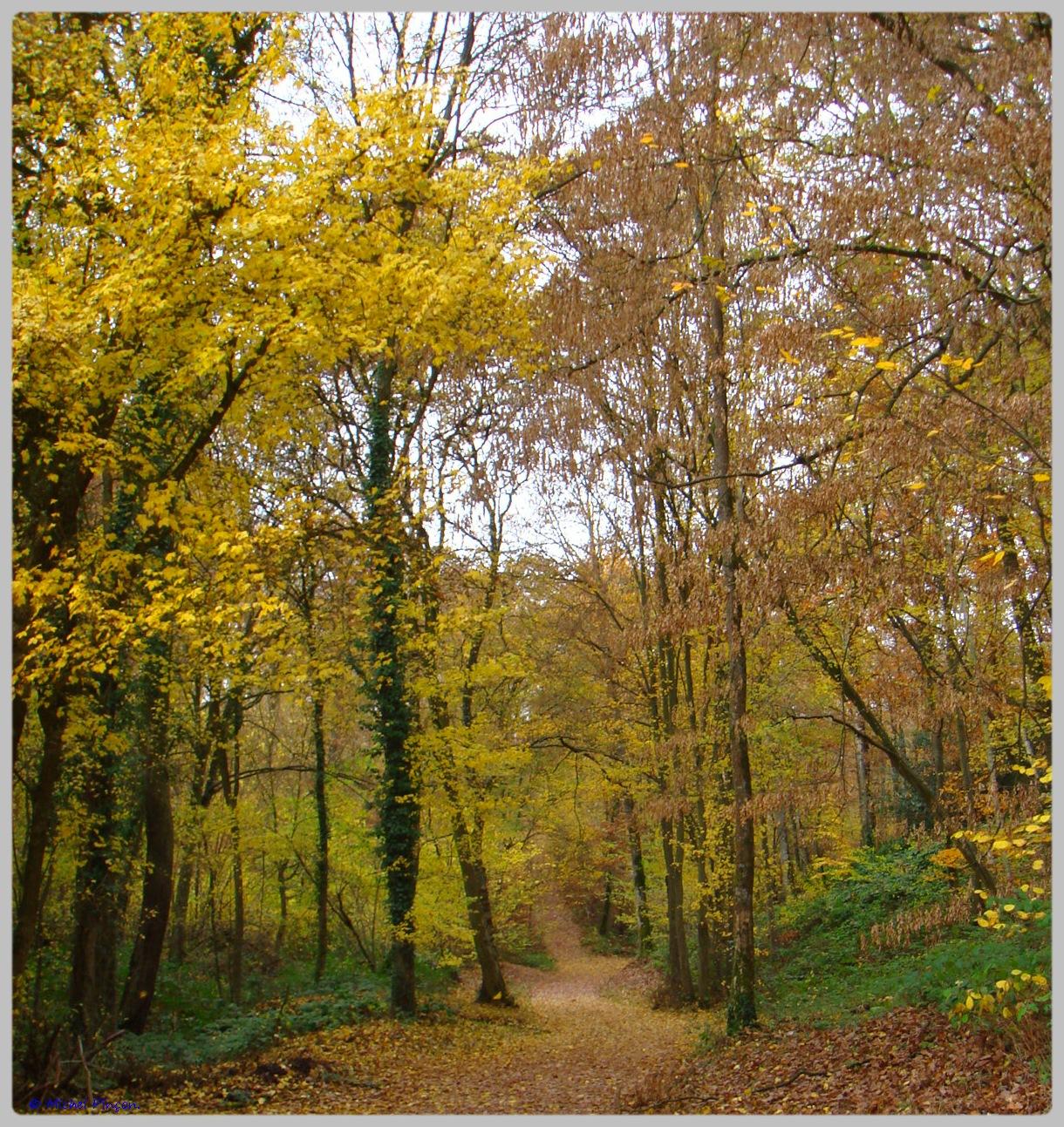 [fil ouvert] la forêt dans tous ses états - Page 10 261324DSC011567