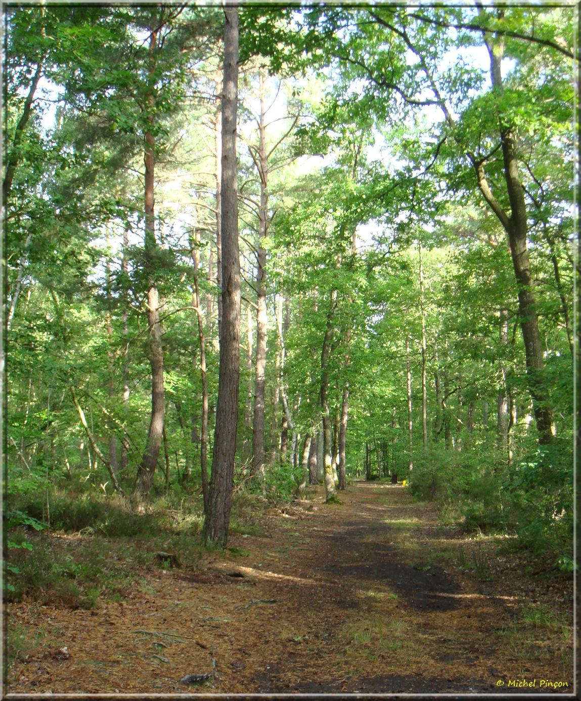 [fil ouvert] la forêt dans tous ses états - Page 14 263129DSC013805