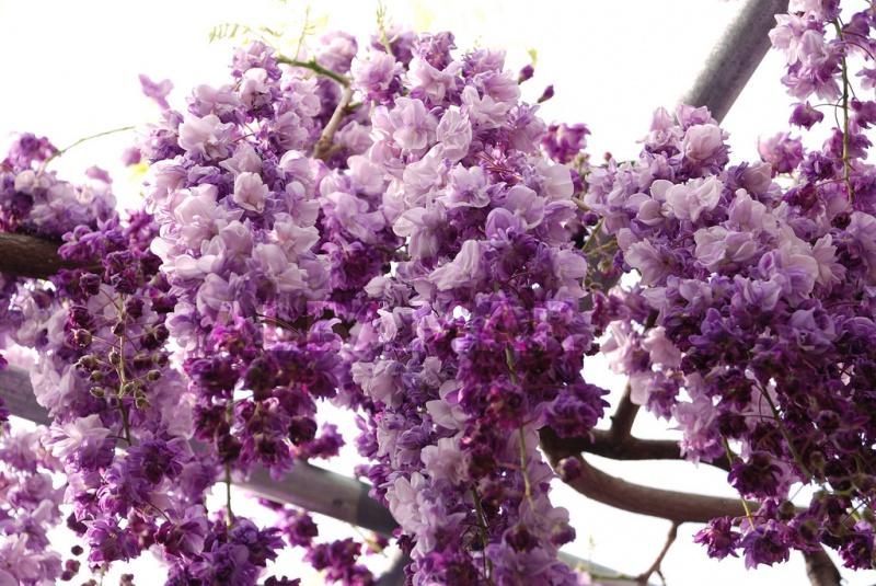 Quel est votre Plante, Arbre, fleur préféré que vous possédez ou non? Si vous n'en aviez qu'une à garder, Laquel/lequel garderiez-vous? 263223824