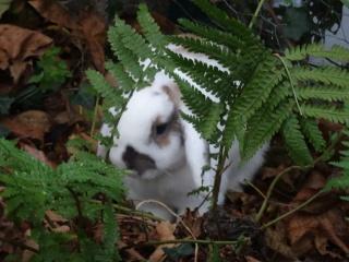 Nina, lapine bélier, née en aout 2011 - Page 9 263784DSC00466