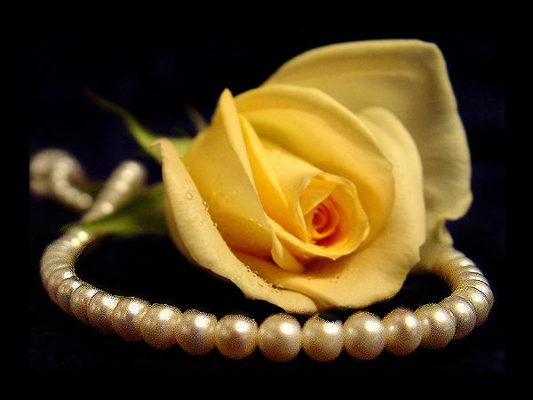 Tubes roses 265506dedb050a