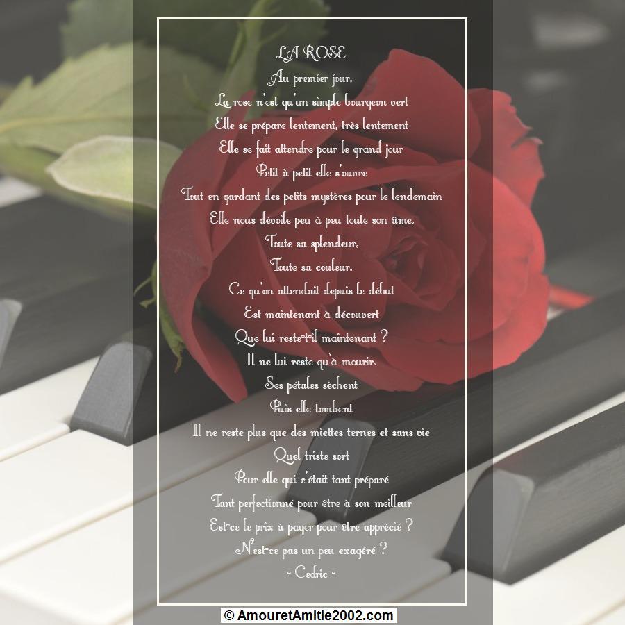 mes poemes du jour - Page 3 267707poeme22larose