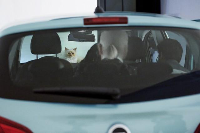En coulisses avec l'Opel Corsa, Karl Lagerfeld et Choupette, top model 268698OpelCorsaLagerfeld293236