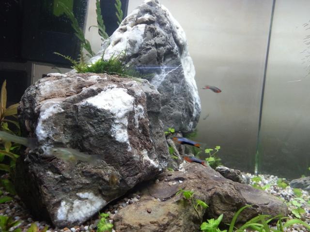 Nouveau Nano 30 litres Walstad, sans engrais, ni filtre! etc 26874520131109163726