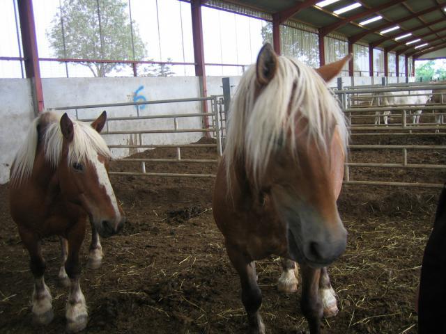 NOS MASCOTTES : ADRENALINE CEDA et IRIS (Pas à l'adoption) 271142IMG4111