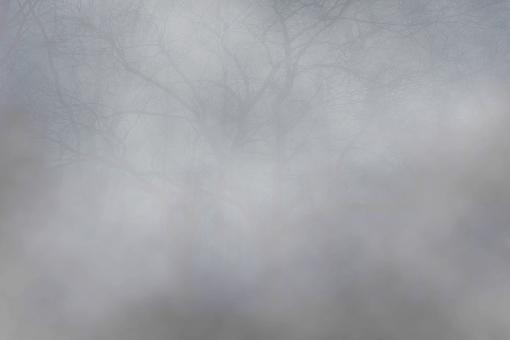 Un rayon de lune dans cette sombre Forêt 272456fortbrumeuse
