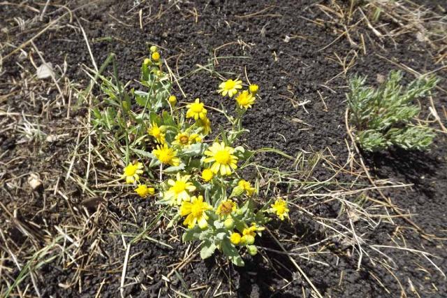 Italie - flore de Sicile 273368DSCF113505