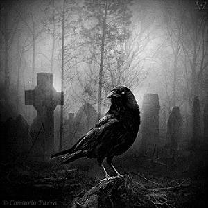Un oiseau de mauvaise augure 277686229ddfaa9e776f15f04d557b994d815d