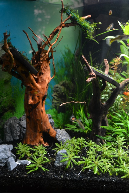 MES AQUARIUMS 240 L Communautaire et 30 L Aquascape + photos - Page 3 2795046505