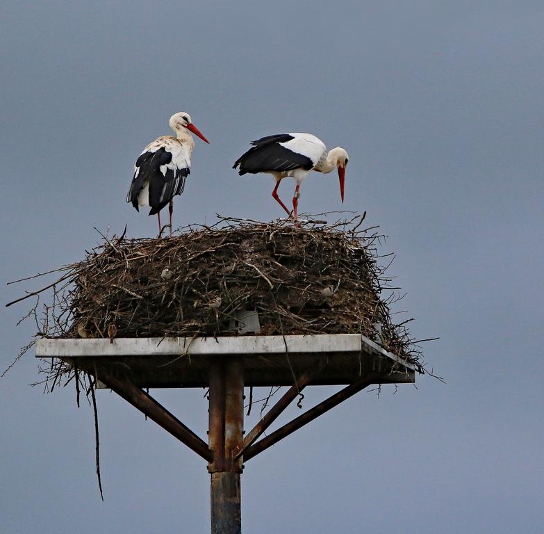 Mes oiseaux 280330re1500Copier