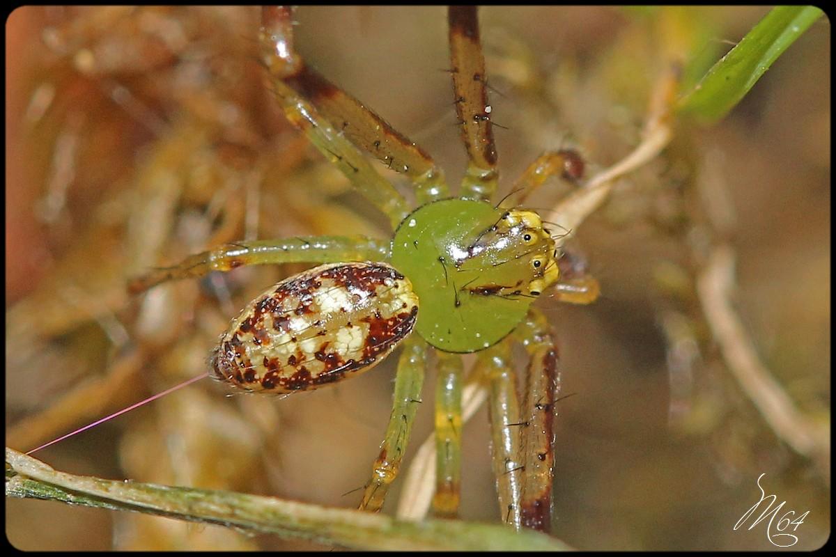 L'araignée à Gilou  286697IMG9594a