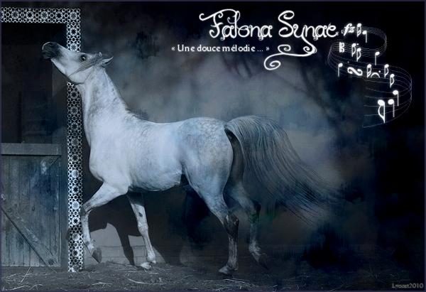 Crédits ; Falona Synae © 289918fsheaderhiver