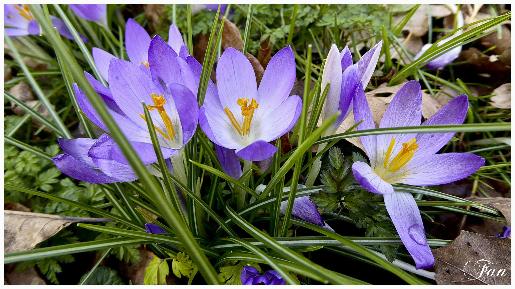 Fleurs de mes chemins - Page 2 291210P1020038bis