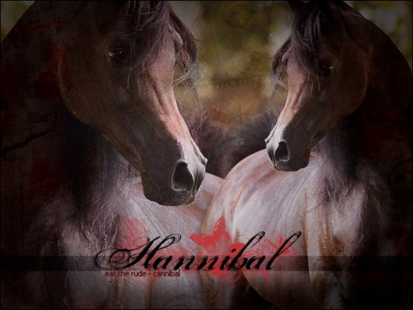 HANNIBAL - ♂ - LIBRE 292380Hannibal2