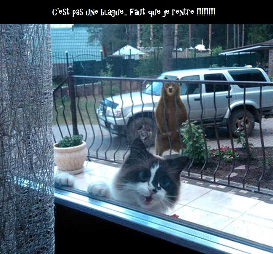 HUMOUR - Drôles de bêtes... - Page 8 294037chatours