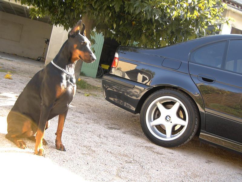 [BMW 530 d E39] Renaissance d'un Cosmos Schwarz Metallic 297452P1010141