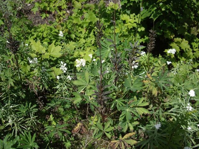 petite flore du Québec 300107IMGP9992