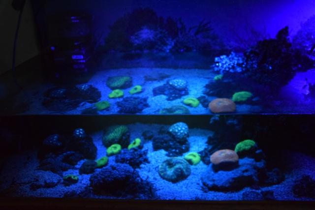 Le nouveau bac du Poissonpané : aquaterrarium de 900L / Nouvelle Calédonie - Page 2 305331DSC0084