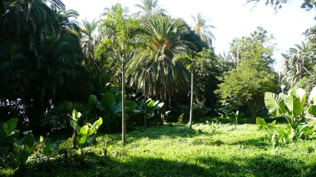 Andalousie Octobre 2011 306169P1100654
