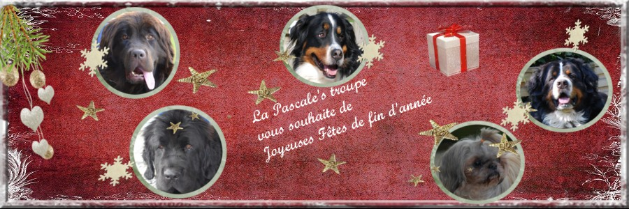 charly je l,ai adopter 315062banniereessai1pascale