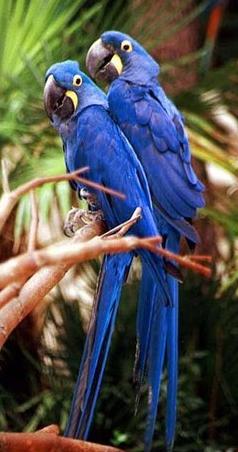 Tubes rapasse et oiseaux 317597Mellmelgibson1ge5