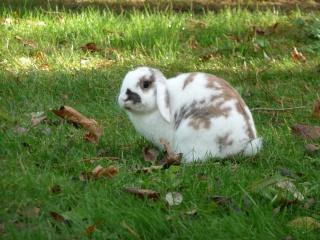 Nina, lapine bélier, née en aout 2011 - Page 8 323609P1140875