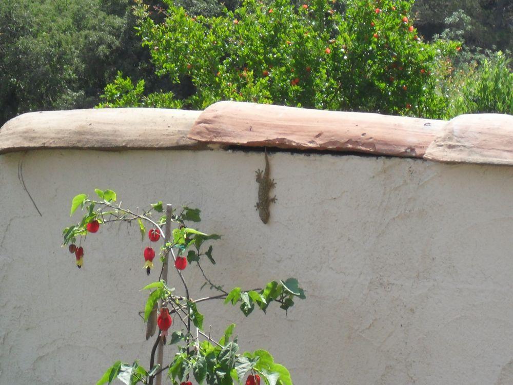 Copains de nos jardins 327105SAM1106