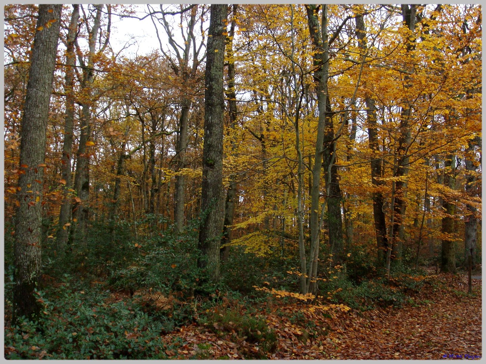 [fil ouvert] la forêt dans tous ses états - Page 10 330631DSC011546