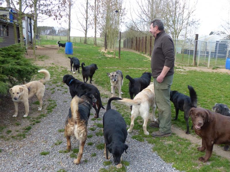 Pongo, chien des rues, né en 2009, très affectueux !! 332481P1080303