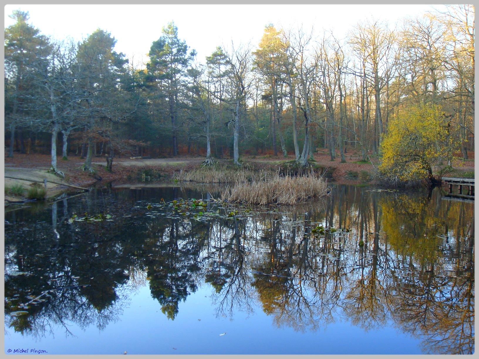 [fil ouvert] la forêt dans tous ses états - Page 10 335575DSC011618