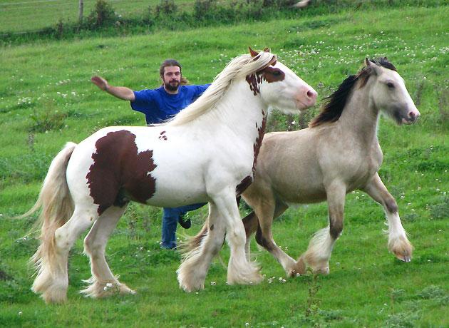 - Les mâles des Légendes Celtiques 336135IMG0825
