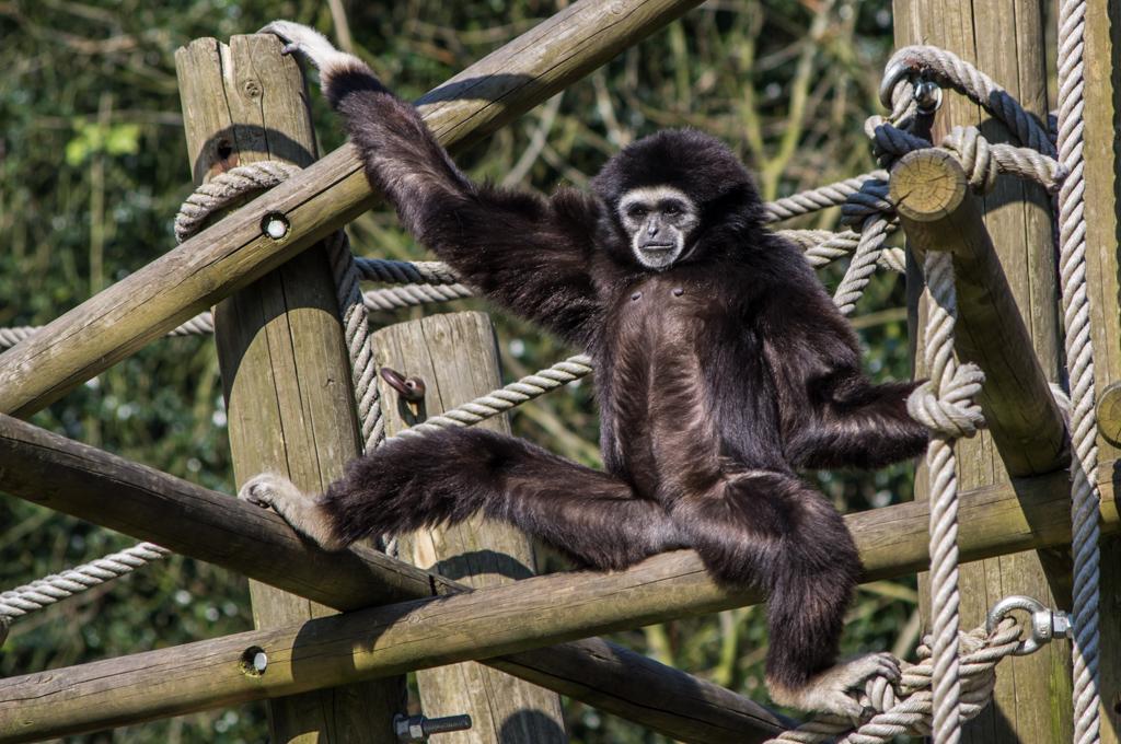 Zoo de Lille 336580IGP3911