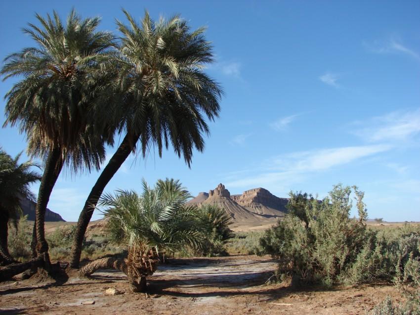 retour maroc 2012 - Page 2 339099139