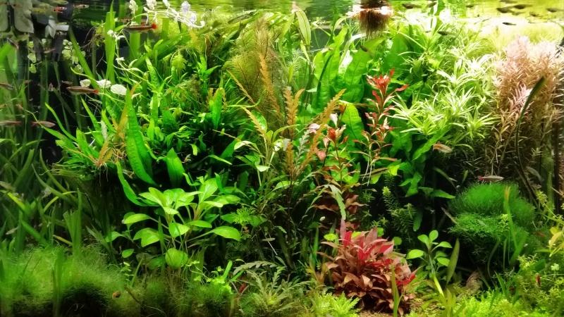 Mes (plus) de 60 plantes dans mon 240 litres - Page 6 34406120141221082513