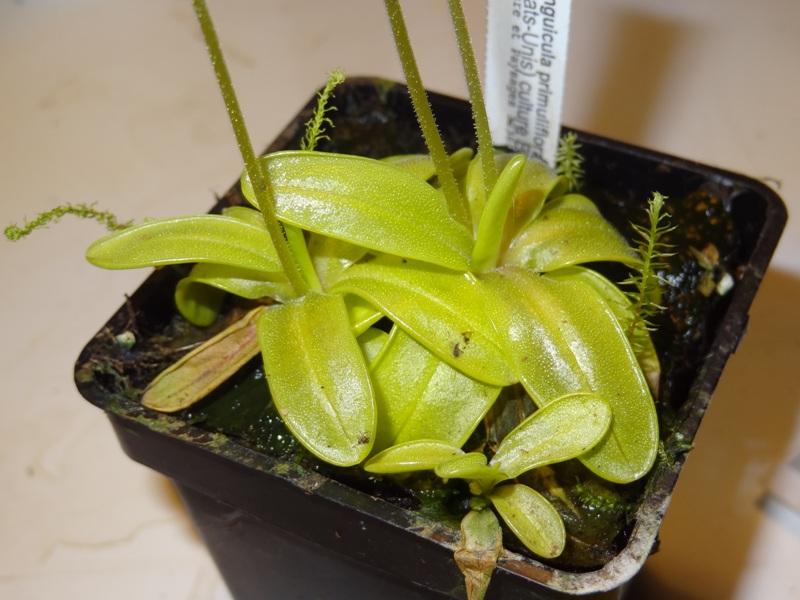 retour de la foire au plante rare de st priest 344981arno009